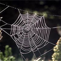 Sản xuất được tơ nhện nhân tạo nhẹ hơn bông, bền hơn thép