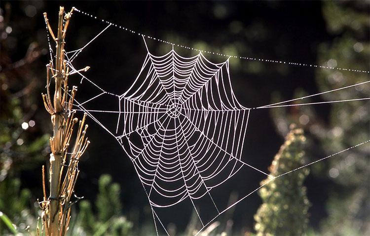 Sợi tơ nhện tự nhiên có tính chất mềm mại nhưng bền chắc.