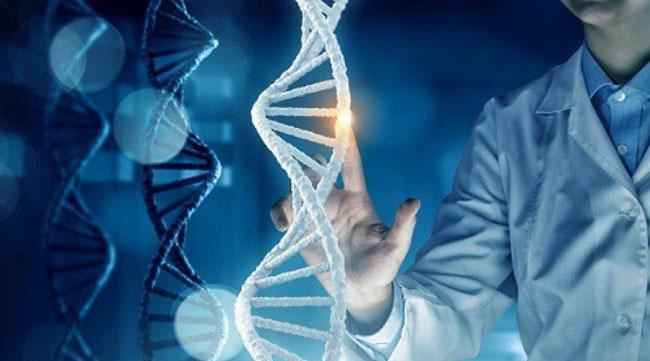 Một zygote là tế bào đầu tiên từ cơ thể người phát triển.