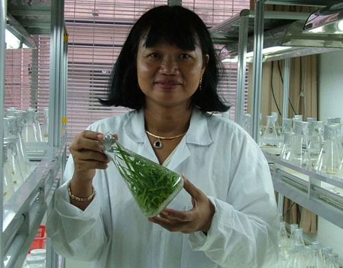 GS Nguyễn Thị Lang trong phòng nuôi cấy mô.