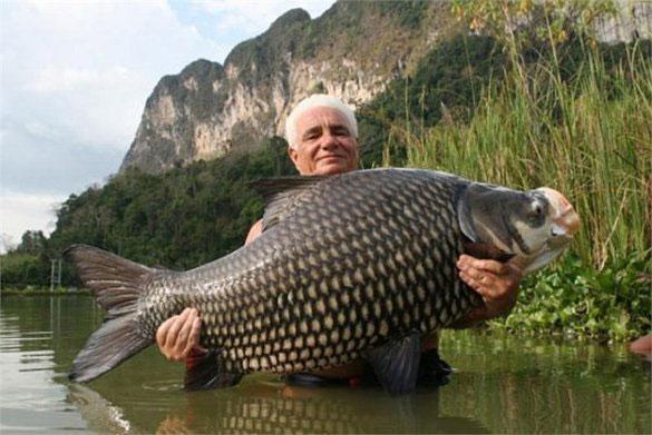 Loài cá này có tên khoa học là Catlocarpio siamensis.