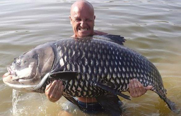 Các cần thủ ở Đông Dương cũng thích thú với việc săn lùng loài cá này.