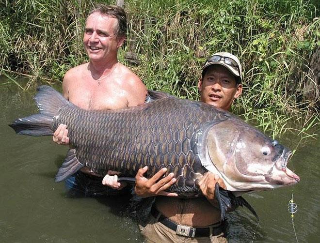 Loài này được ghi nhận đã hoàn toàn tuyệt chủng tại sông Chao Phraya.