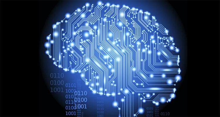 Đại não của chúng ta chỉ nặng hơn 1400gram