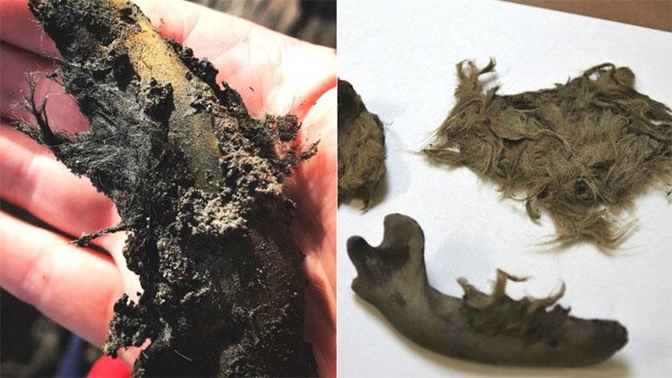 Xương hàm của con chó (trái) và mẩu xương dính lông (phải) mới được khai quật.