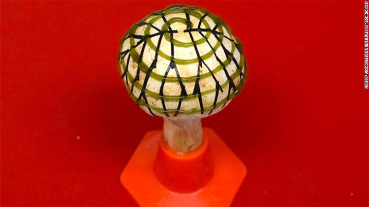 Cây nấm được gắn vi khuẩn cyanobacteria và mạch điện.
