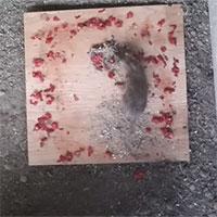 Chuột mò vào bẫy đánh chén ớt cay nhất thế giới