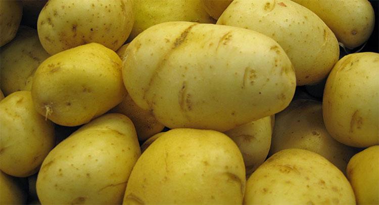 Vật liệu làm từ nhựa khoai tây này phân hủy chỉ trong vòng 2 tháng.