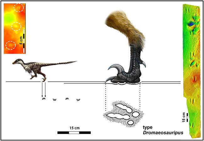 Hóa thạch 110 triệu năm tuổi được xác định thuộc về một loài khủng long chân thú nhỏ.