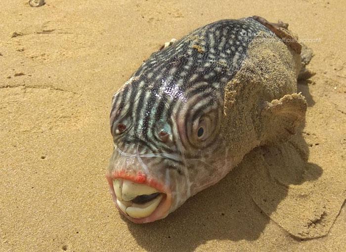 Đây là lí do tại sao những sinh vật như này nên ở đúng vị trí của nó - dưới đáy đại dương