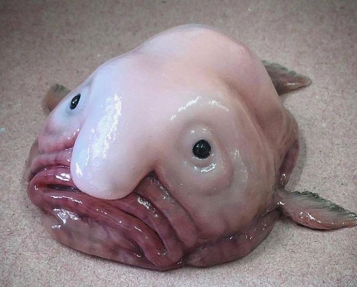 Cá thạch