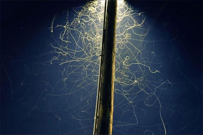 Đây là cách những con thiêu thân vẽ lên bầu trời dưới ánh đèn đêm.