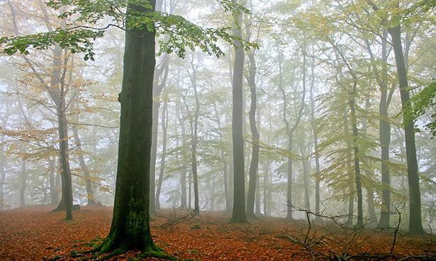 Áo nỉ mềm mại được làm từ gỗ 100% rất thân thiện với môi trường