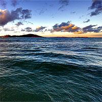 Sinh vật kỳ lạ dưới đáy Thái Bình Dương có thể cứu thế giới?