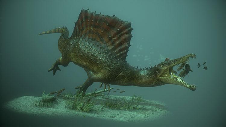 Spinosaurus có một cái vây khổng lồ như cánh buồm trên lưng.