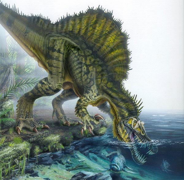 Spinosaurus không cần biết bơi cũng vẫn bắt được cá.