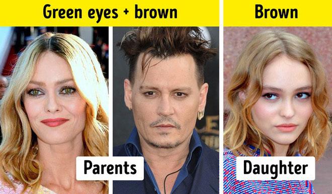 Màu mắt nâu là gene trội, đặc biệt là khi nó đến từ người cha.
