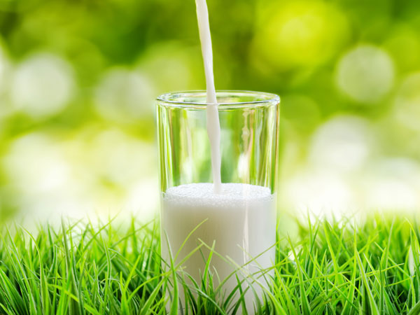 Sữa thô
