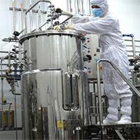 Lần đầu tiên Việt Nam tự sản xuất vắc xin lở mồm long móng