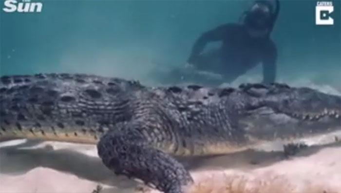 Trong video, thợ lặn có thể được nhìn thấy tiến sát đến cá sấu, chỉ cách vàicm.