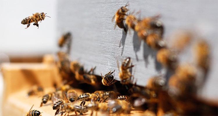Đàn ong