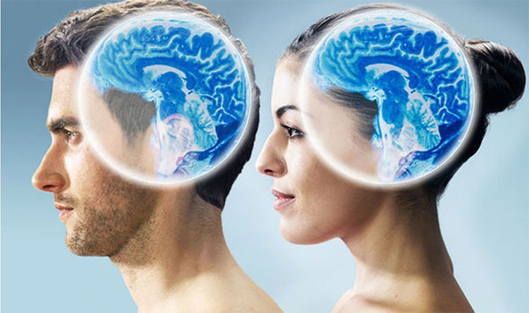 Có sự khác biệt đáng kể giữa kích thước bộ não của nam giới và nữ giới.