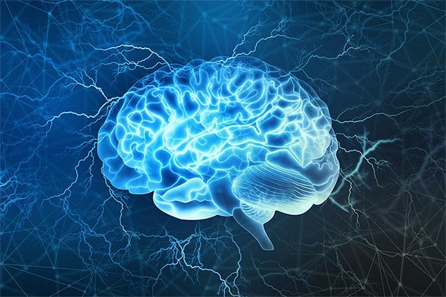 Khi đánh giá về độ thông minh của một người, không thể dựa hoàn toàn vào kích thước bộ não.