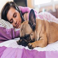 Phụ nữ ngủ ngon hơn khi nằm cạnh cún cưng