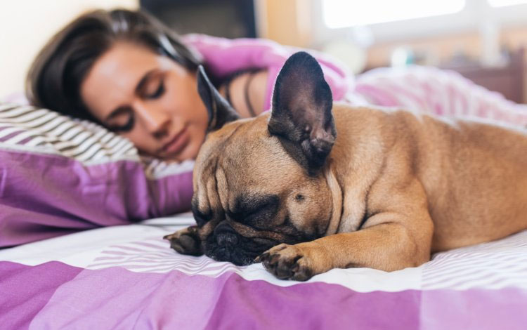 Nữ giới ít bị gián đoạn hơn khi có những chú chó nằm bên.