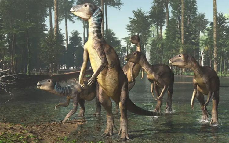 Hình ảnh phục dựng được cho là loài khủng long Weewarrasaurus pobeni.