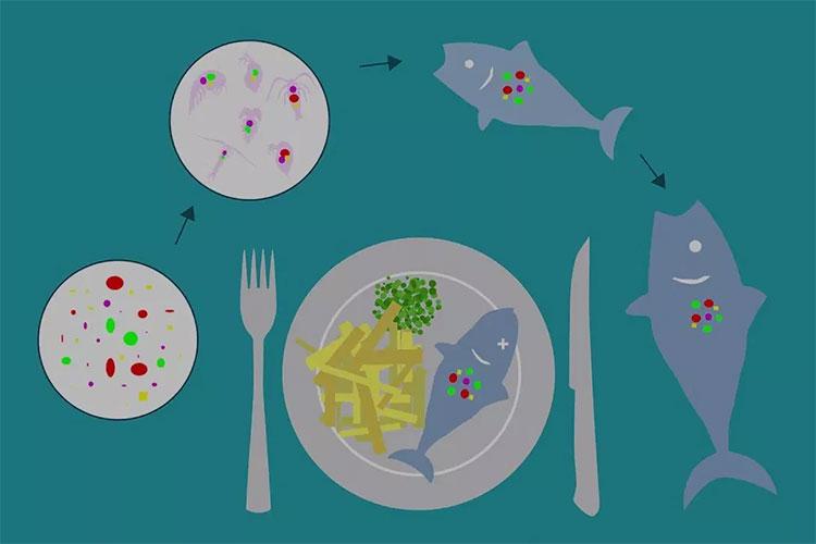 Hạt vi nhựa được cảnh báo như một thảm họa toàn cầu đối với môi trường lẫn sức khỏe.
