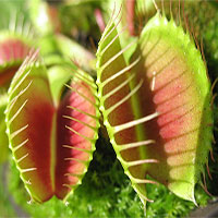 """Kỳ thú những """"chiêu trò"""" được thực vật sử dụng trong quá trình sinh sản"""