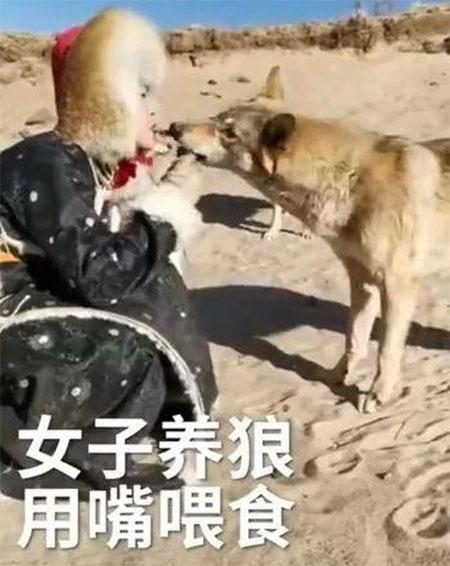 Zhou Xinyue, 20 tuổi, đang cho chó sói ăn.