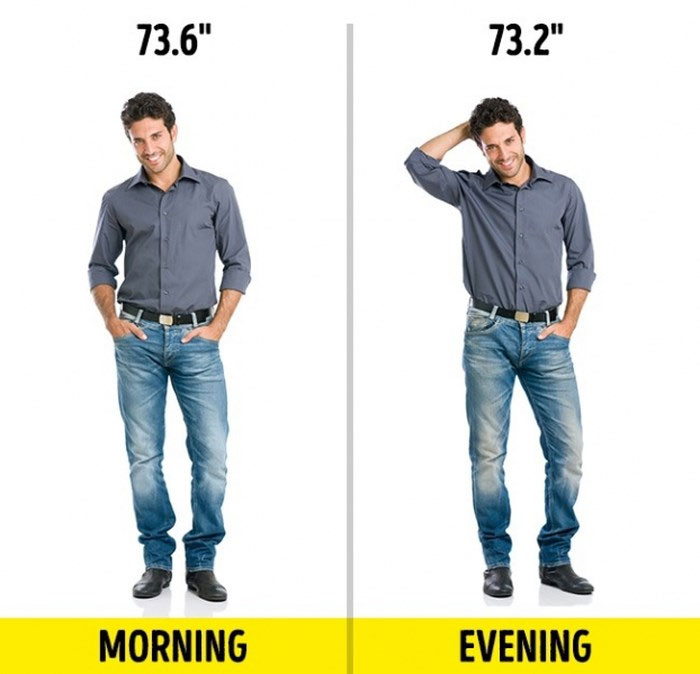Buổi sáng bạn cao hơn buổi tối 1cm