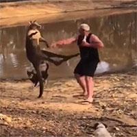 """Kangaroo """"tung cước"""" đá người đàn ông Australia ngã ngửa"""