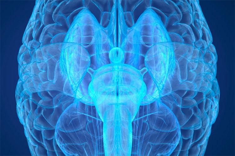 Cỗ máy này giúp chúng ta dựng lại được hoạt động của toàn bộ các neuron thần kinh của một bộ não người đang sống.
