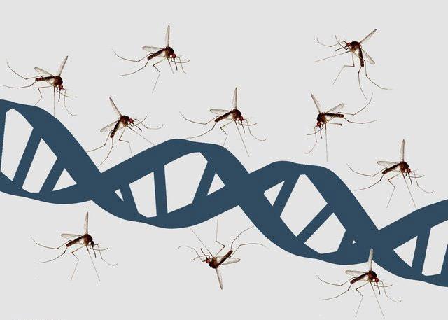 HIV không lây qua các tiếp xúc thông thường và vết côn trùng đốt (trong đó có muỗi).