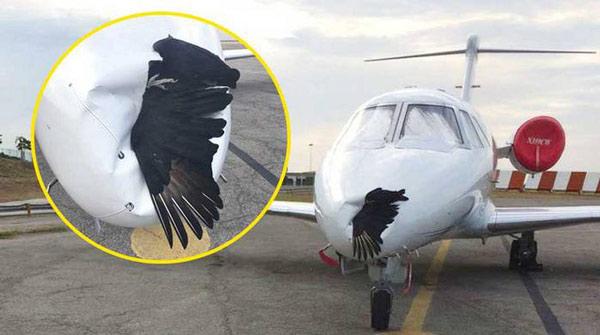 Chim và máy bay luôn là hai vật thể không đội trời chung
