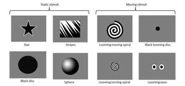 Một dạng ảo ảnh đặc biệt với hình dạng các vòng tròn đen đồng tâm trên nền trắng