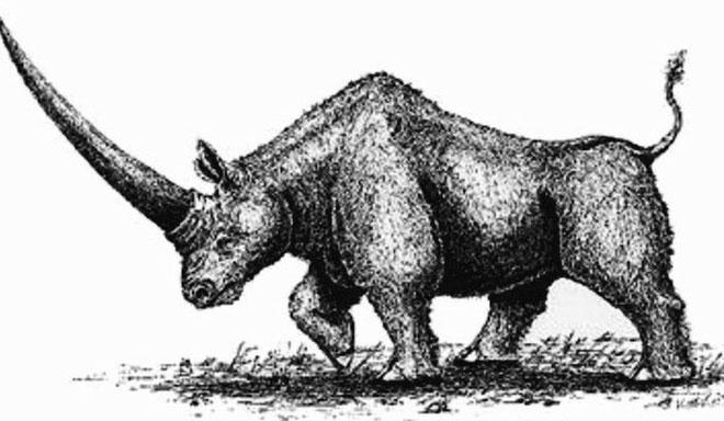 Loài kỳ lân Siberia tuyệt chủng từ 39.000 năm trước.