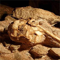 Tổ tiên loài người đã biết đi bằng chân ngay cả khi còn sống trên cây