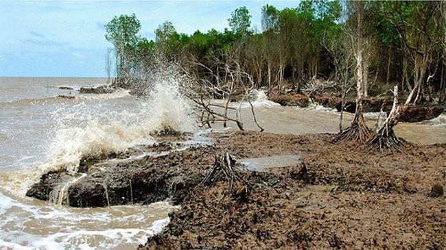 Khu vực bán đảo Cà Mau có tốc độ sụt lún và xâm lấn bờ biển mạnh nhất.