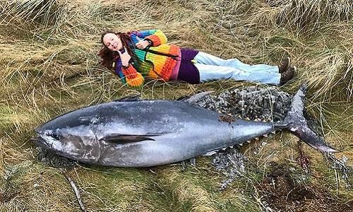 Con cá ngừ vây xanh dài khoảng hai mét.