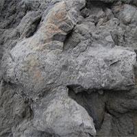 Hàng loạt dấu chân khủng long phát lộ sau bão tại Anh