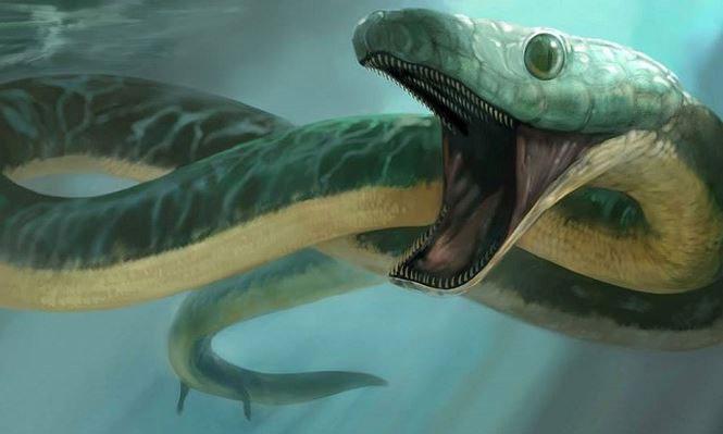 Pachyrhachis problematicus - Loài rắn biển cổ đại có 2 chân