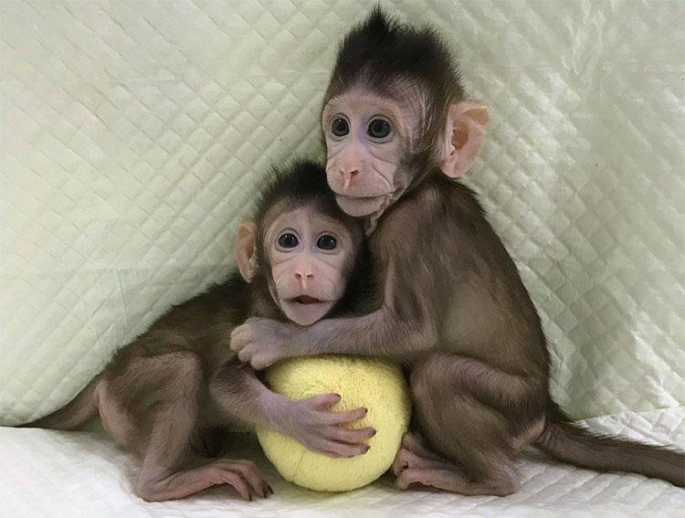 Hai con khỉ đuôi dài khỏe mạnh tên Zhong Zhong và Hua Hua.