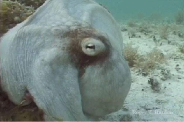 Con bạch tuộc đổi màu ngay lập tức.