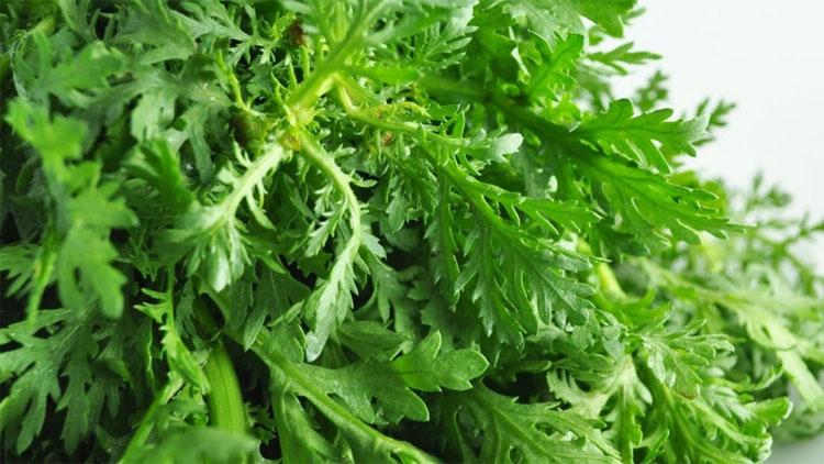 Cải cúc là món ăn quen thuộc vào mùa đông, dễ ăn và dễ chế biến cho mọi đối tượng.