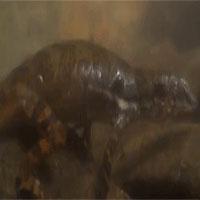 Phát hiện loài thằn lằn có thể thở… được dưới nước