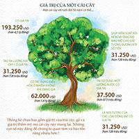 Bạn biết gì về giá trị của một cây xanh 50 tuổi?